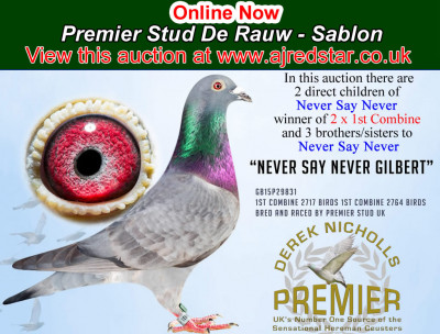 Online Now. Premier Stud offer the very last of their De Rauw - Sablon from their best racers and breeders.